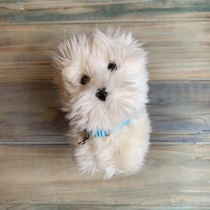 American Girl Doll Pet Coconut White Westie Dog